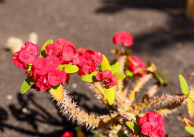 gardens_029 (Grande)